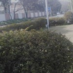 qmobile noir x75 front camera