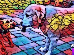 Artisto- A Video Editing App Uses Neural Network Similar to Prisma
