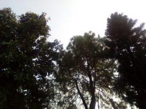 telenor infinity e front camera results