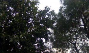 qmobile x33 camera results