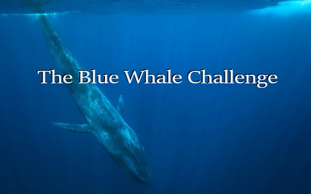 18 Years Old Pakistani Entrepreneur Developed an Anti Blue Whale Game