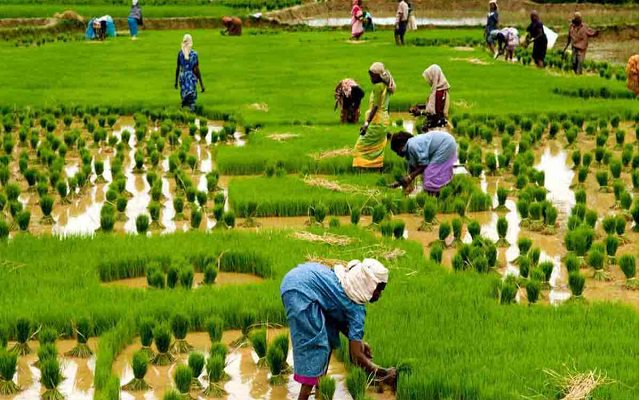 Telenor & PLDDB Launch 'Khushaal Aangan', a Dedicated IVR Service for Female Farmers