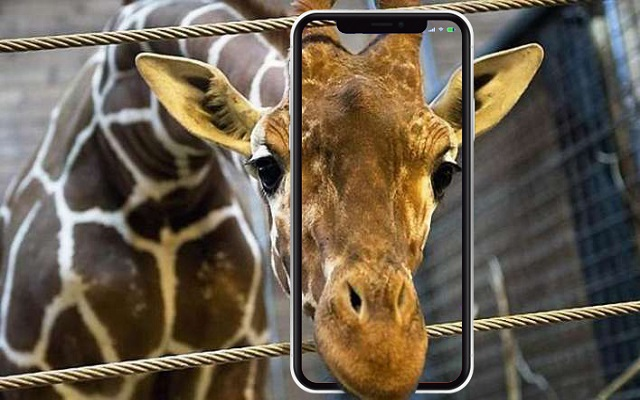 Lahore Zoo Mobile App To Be Launched Soon