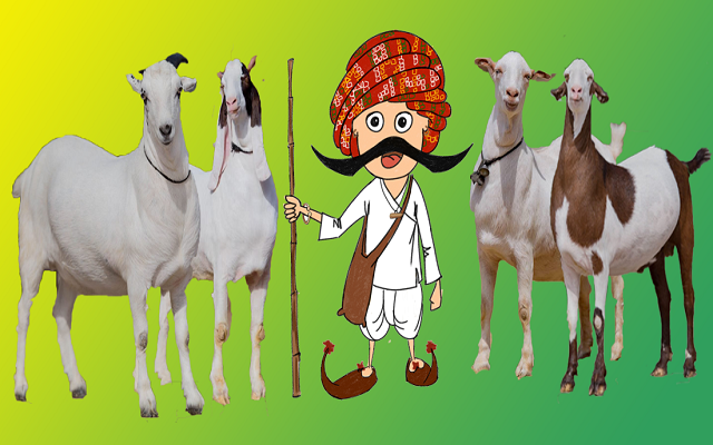 Qurbani App: Making Livestock Trade More Convenient