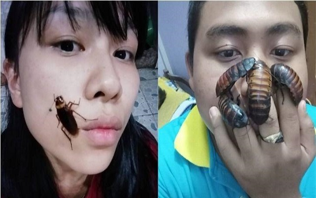 Cockroach Challenge Goes Viral on Social Media- It can Have Serious Health Issues