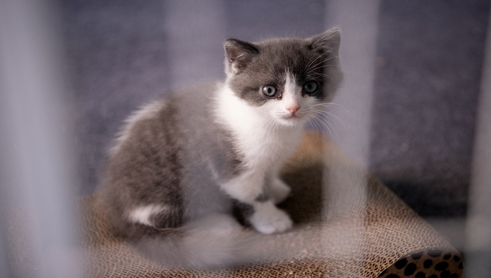 Bloom of Technology: China Creates First Clone Kitten