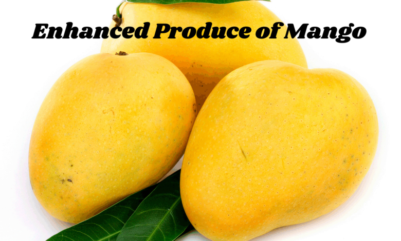 Enhancement of Mango Production with Modern Technology