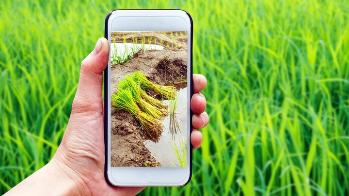 Role of Technology in Agriculture